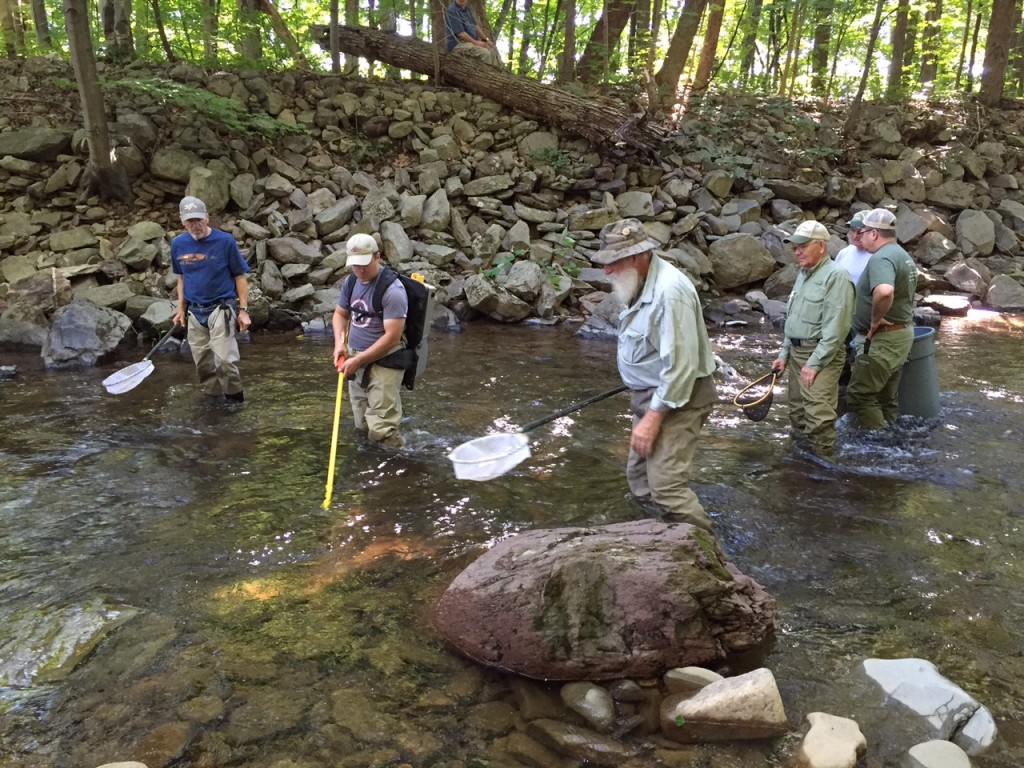 Pocono Creek Electrofishing
