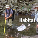 Pocono Creek Habitat Improvement Project